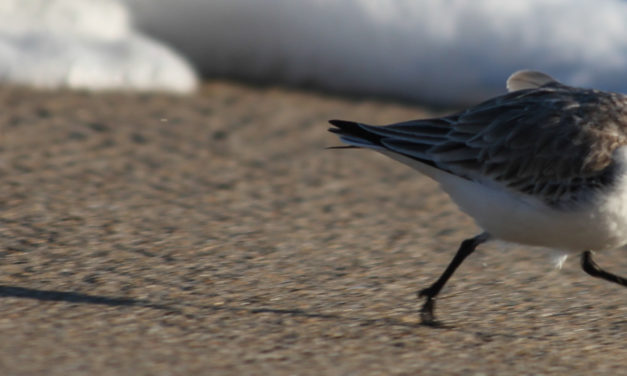 Beginner Birding Mistakes