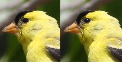 how to edit bird photos