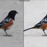 Editing Bird Photos: A Beginner's Guide
