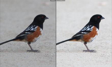 Editing Bird Photos: A Beginner's Guide