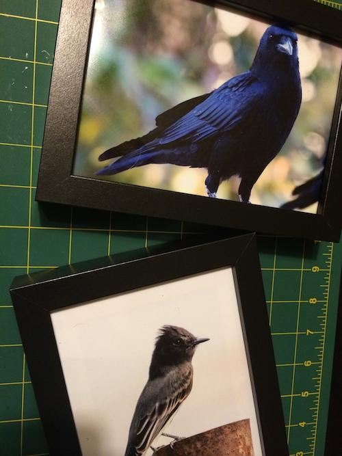 framed prints - printing bird photos