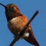 Sepulveda Basin – Birding Summary