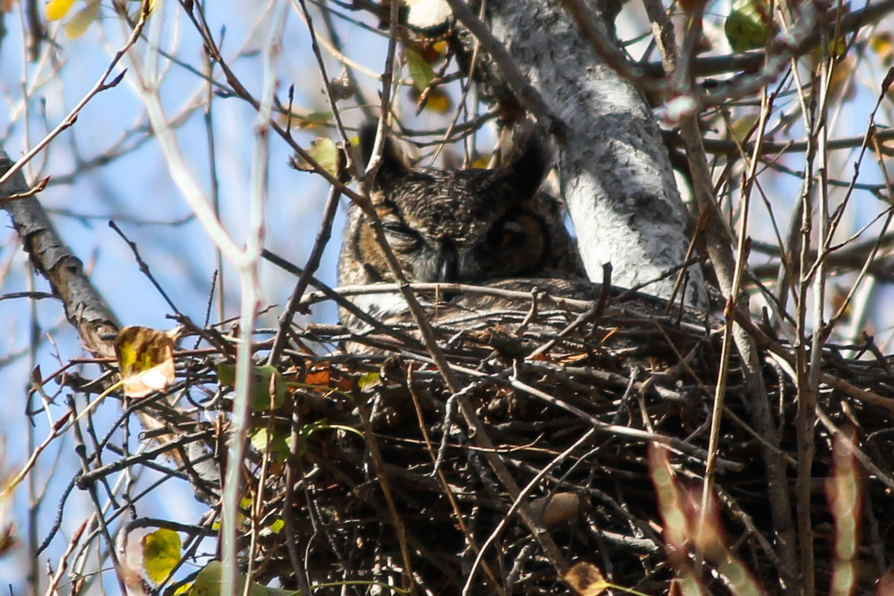 beginner birder