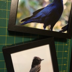 Tips for Printing Bird Photos