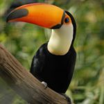 Toucan Beak Heat Regulation