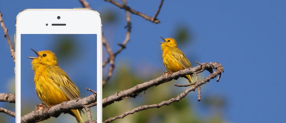 Birdsnap App Review