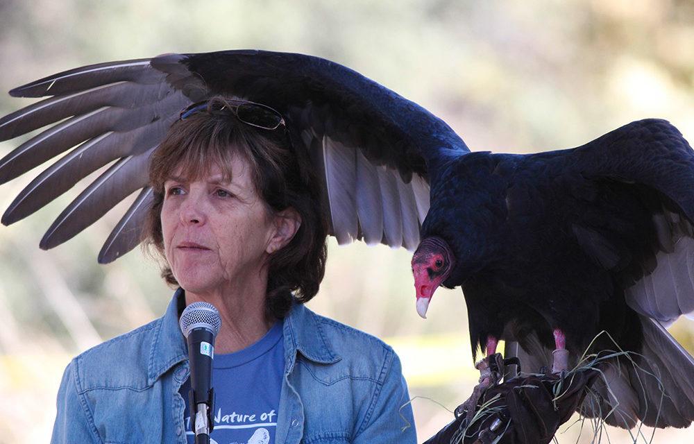 2nd Annual Los Angeles Bird Festival on December 5th