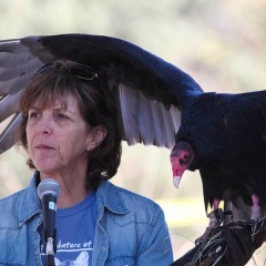 2nd Annual Los Angeles Bird Festival on December 5th