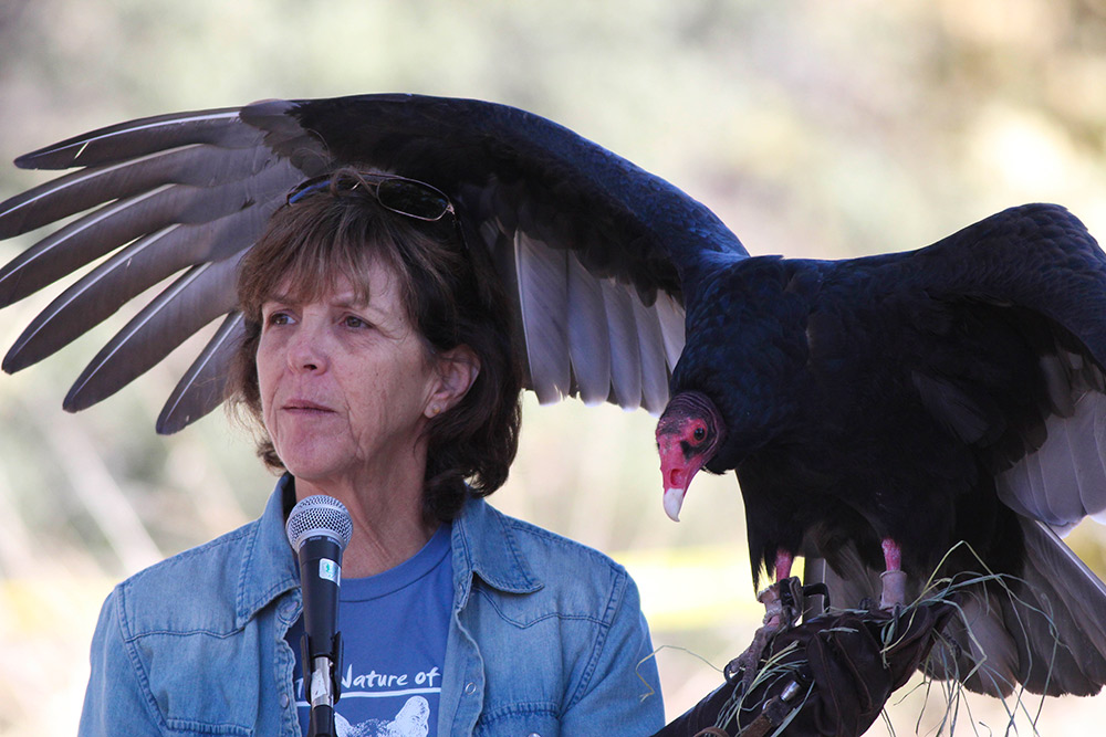 los angeles bird festival turkey vulture