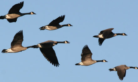 Happy Spring! Here are The Birds That Migrate to North America for Spring