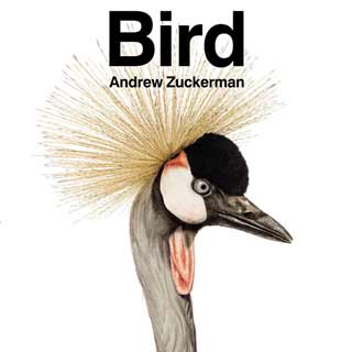 bird andrew zuckerman book