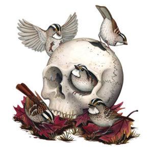 bird with skull art