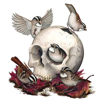 bird with skull art