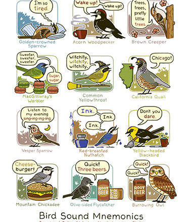 mnemonics bird call poster western north america