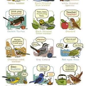 mnemonic bird calls poster eastern north america