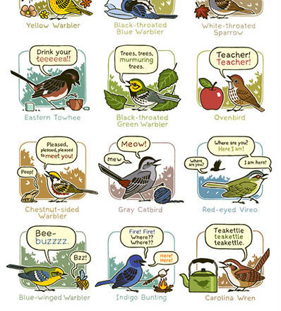 mnemonic bird calls poster eastern north america