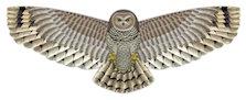 owl kite gift