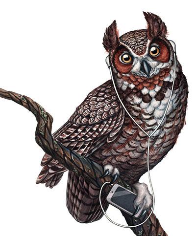 owl music art