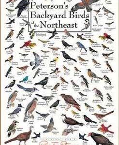 peterson's backyard birds of northeast america poster