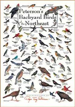 peterson's backyard birds of northeast america poster