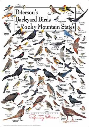 peterson's-backyard-birds-of-the-rocky-mountain-states poster