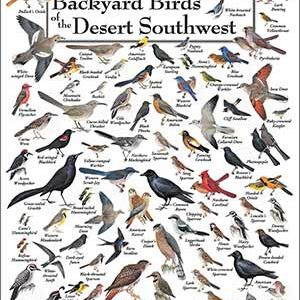 Mnemonic Bird Sounds Poster Eastern North America | Because