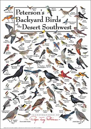 peterson's-backyard_birds_of_desert-southwest