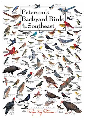 peterson's backyard birds of the southeast poster