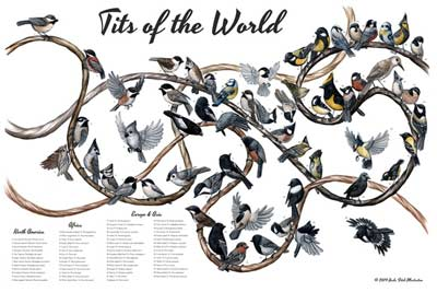 tits of the world poster