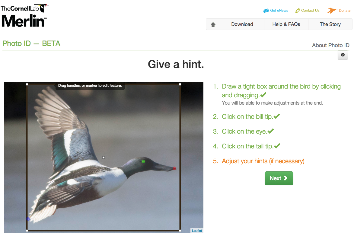 online bird identifer - merlin photo id