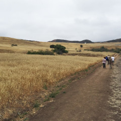Birding at Rancho Sierra Vista