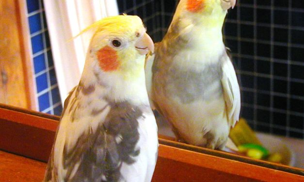 6 Things to Know Before Getting a Pet Bird