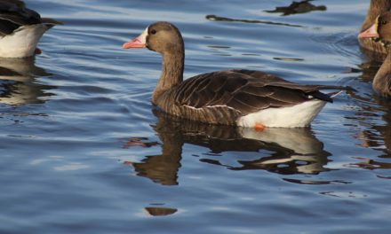 A Day in The Life of a Waterfowl Biologist