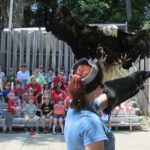 Behind the Scenes at a Birds of Prey Show