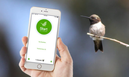 How to Record Bird Sightings with Your Phone