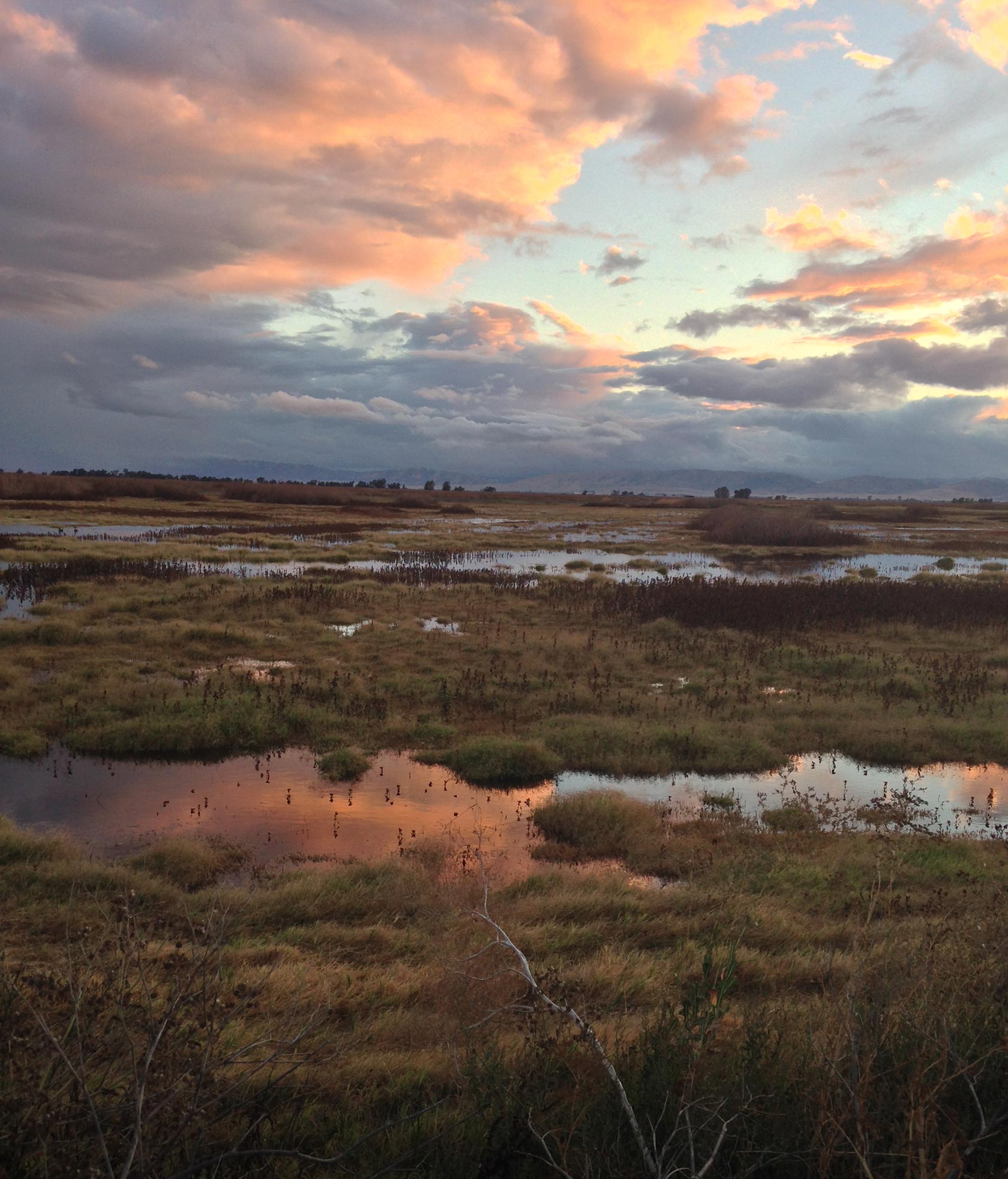 marsh sunset wildlife biology