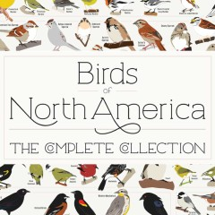 New Birds of North America Poster – 740+ Species