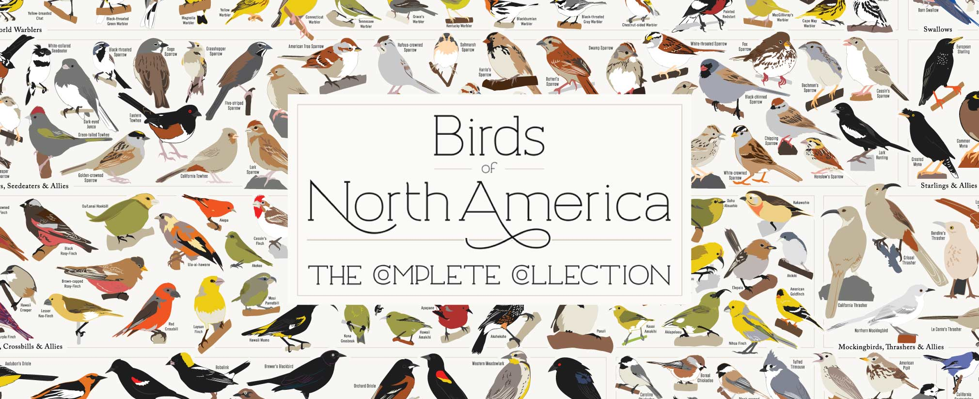 Birds Of North America Poster The Complete Collecrtion