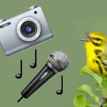 New eBird Update Brings Photos and Audio to Checklists