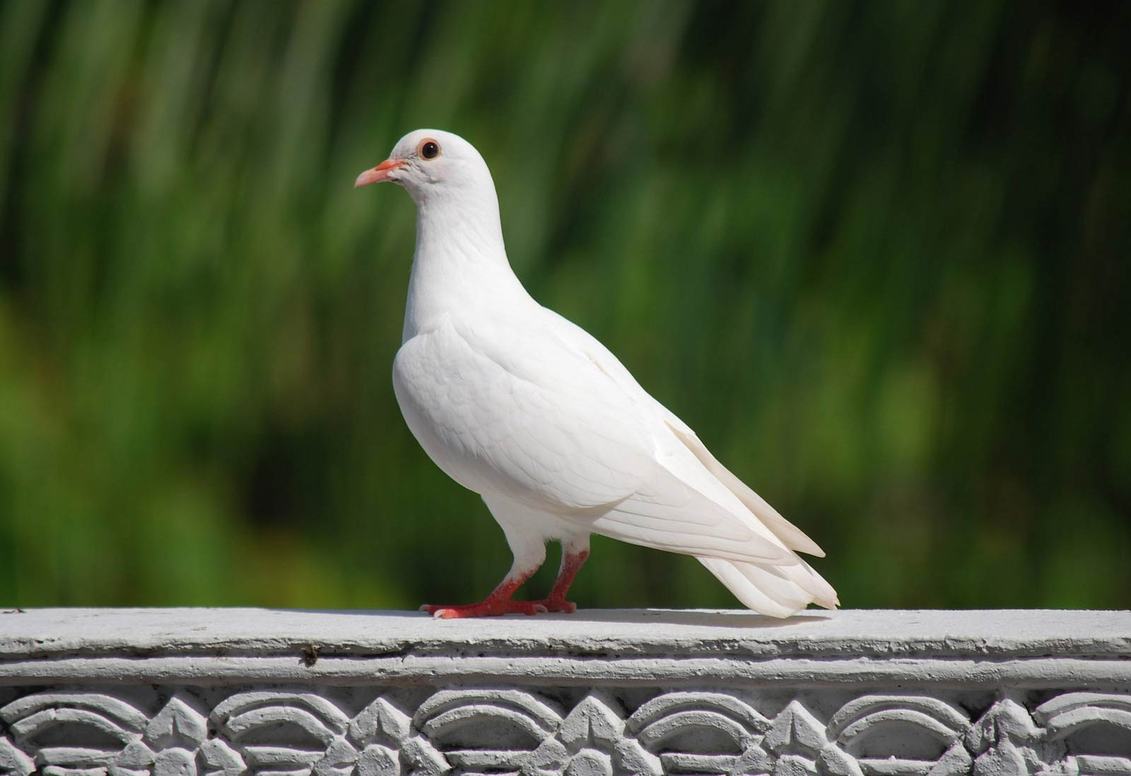 5 Things You Might Not Know About Pigeons Because Birds
