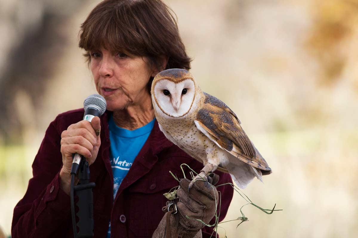bird fest barn owl