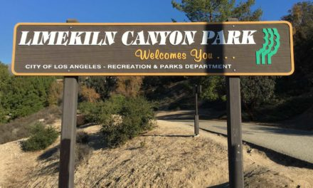 Christmas Bird Count in Los Angeles at Limekiln Canyon