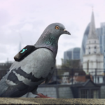 London Twitter Users Can Request Air Quality Checks from Pigeons