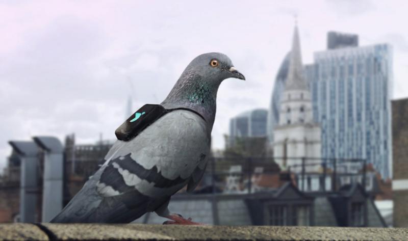 pigeon air quality tweet