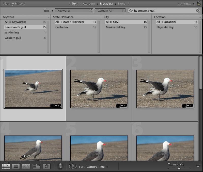organizing photos using species keywords