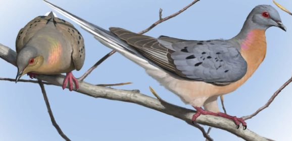 Passing on the History of the Passenger Pigeon
