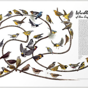 warblers of new england poster
