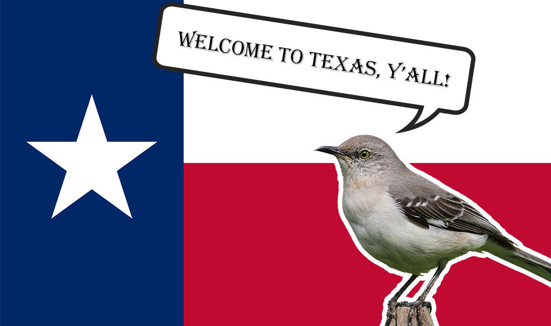 Big Move to the Lone Star State and Meeting the Neighborhood Birds