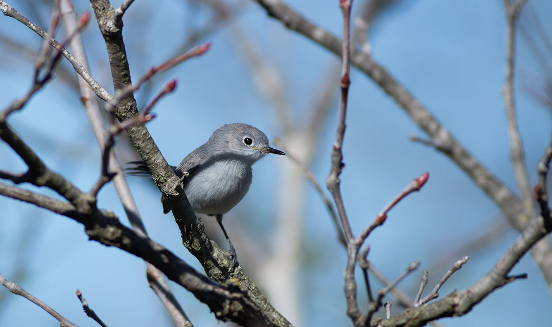 The Backyard Bird Count is Almost Here!