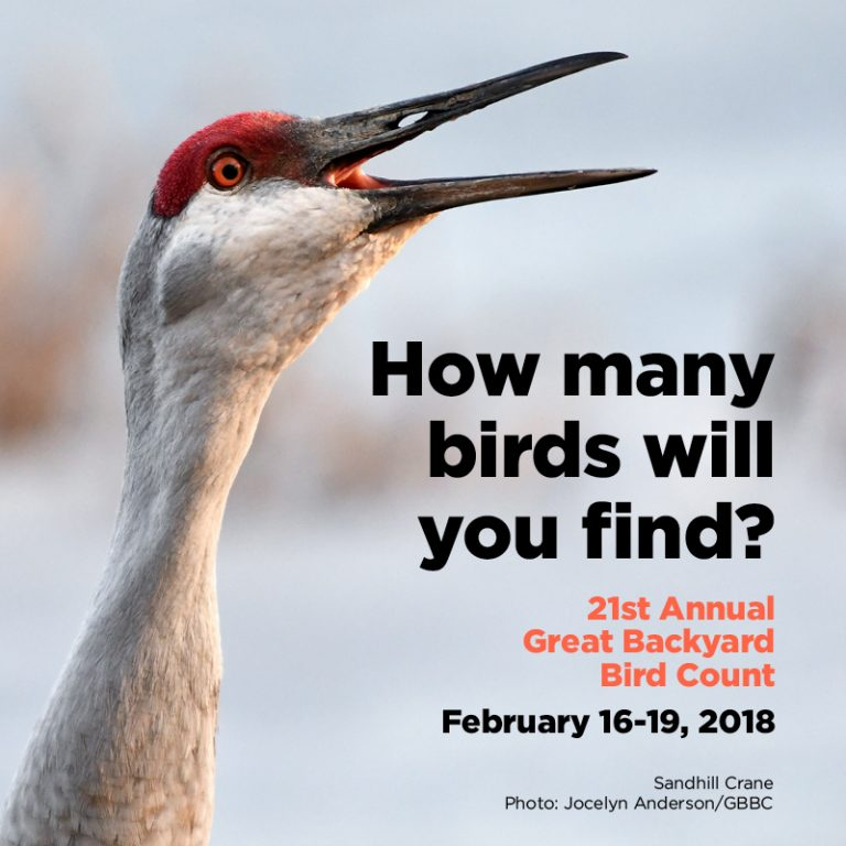 The Backyard Bird Count is Almost Here! - Because Birds